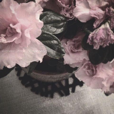 interesting pink lifestyle flower stilllife