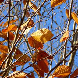 autumn nature natural istanbul sakl freetoedit