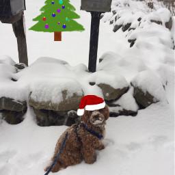 santadog christmas snowy puppy mailboxes freetoedit