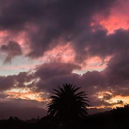freetoedit sunset palmtrees capetown southafrica