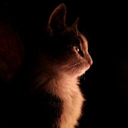 cats night 黑貓 如果世界漆黑其实我很美 黑处有什么 freetoedit