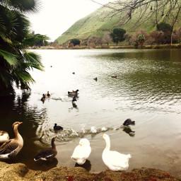 dicks lake california