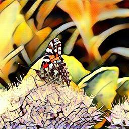 butterfly live backyard nature colorsplash
