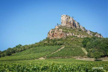 photography travel france burgundy vineyard