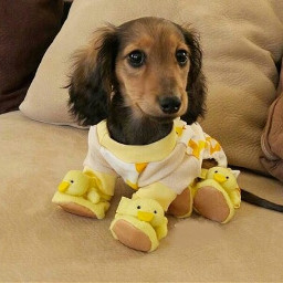 dog baby freetoedit