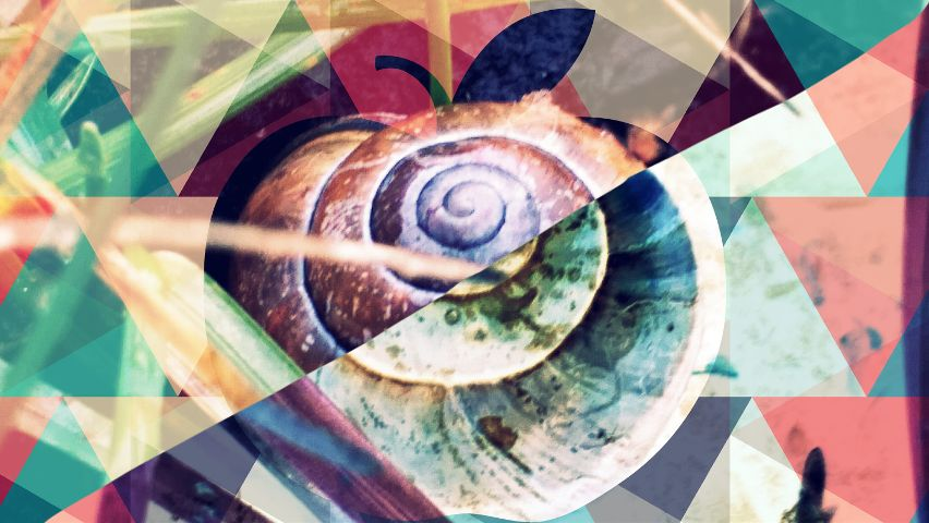 collage nature colorful pets snail
