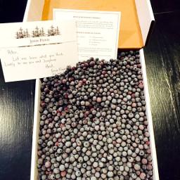 wildblueberries blueberries maine snl