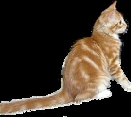 freetoedit kitten