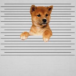 mugshotremix freetoedit cute puppy