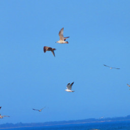 blusesky bird freetoedit