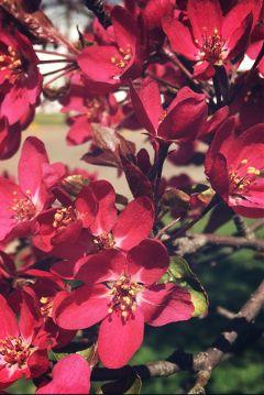 springtime flowers tree pennsylvania minimalism freetoedit
