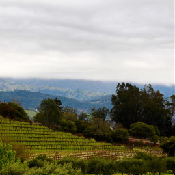 freetoedit winecountry vineyard california sonomacounty