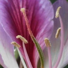 flowers treeflowers spring zoom